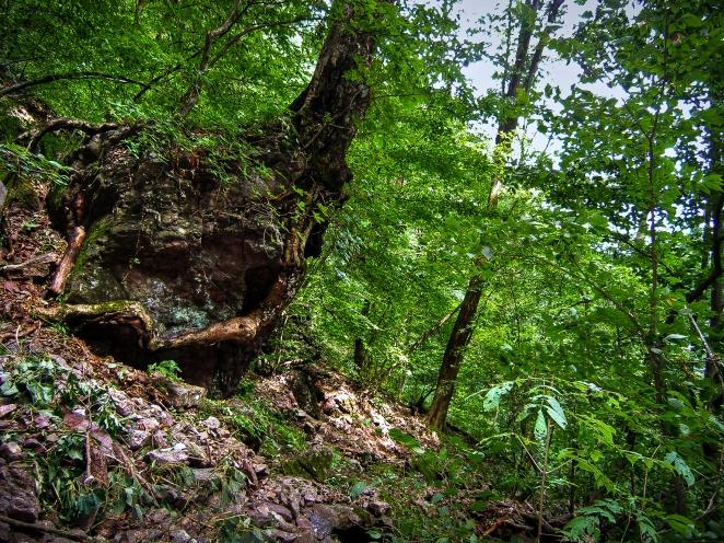 ryogami trail