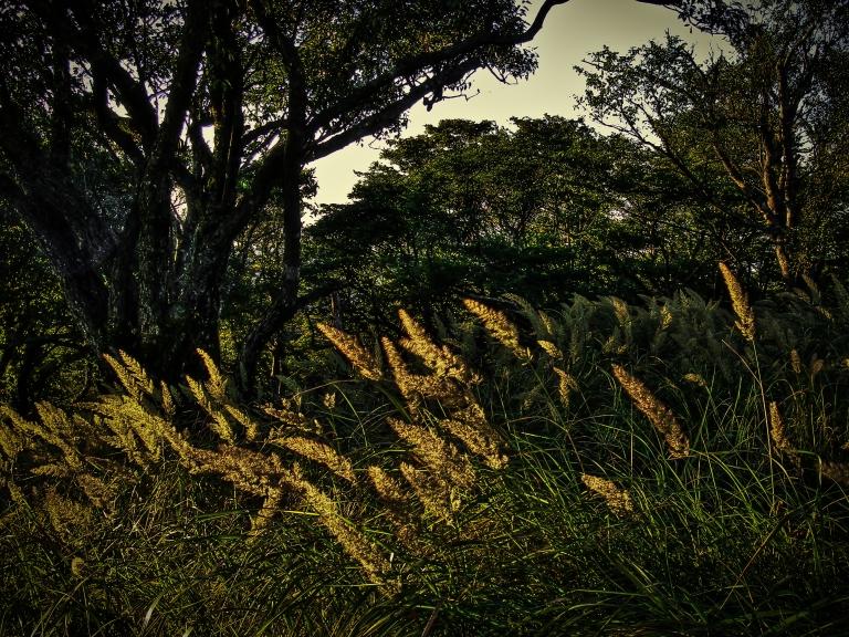 afternoon grass