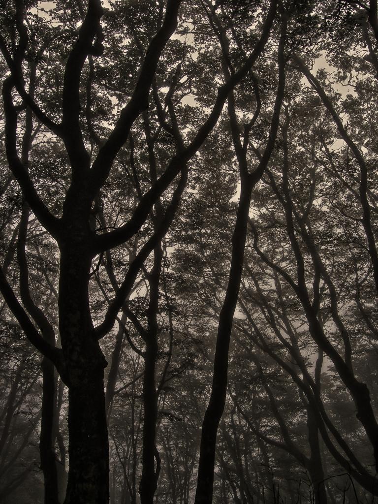 amagi trees