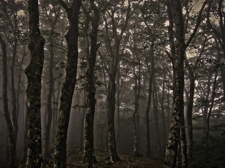 amagi woods